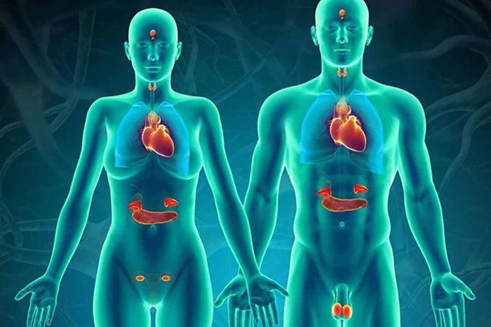 Bộ phận này còn được biết đến với tên gọi khác là TW thần kinh hay tuyến nội tiết