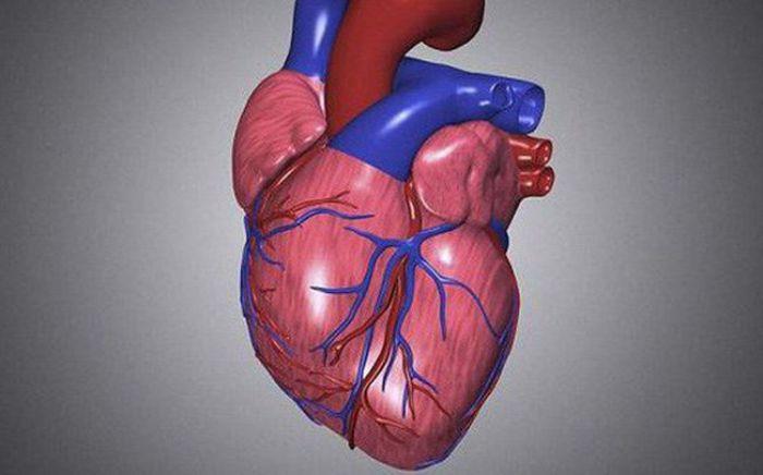 Nếu muốn cung lượng tim tăng thì sức co bóp của tim cũng phải nhanh và mạnh hơn bình thường