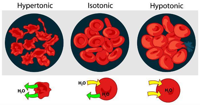 Áp suất thẩm thấu của máu là gì?