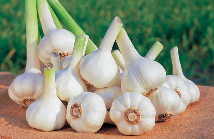 Tỏi tươi được khuyến khích sử dụng trong bữa cơm hàng ngày của người cao huyết áp