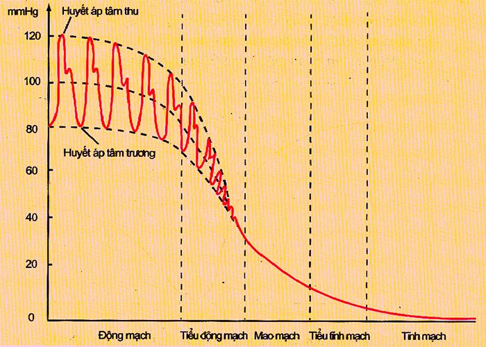 Biến động của huyết áp trong hệ mạch