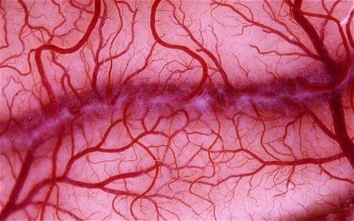 Tăng sinh mạch máu là gì?