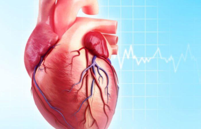 Nhịp tim chuẩn của cơ thể con người