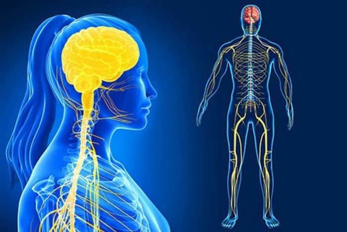 Hệ thần kinh giao cảm là gì?