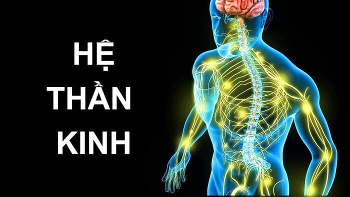 Hệ thần kinh bị tổn thương là một trong những nguyên nhân chính của tình trạng tiểu đường gây tê chân tay