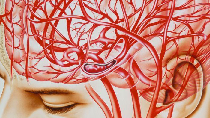 Hệ thống mạch máu trong cơ thể người