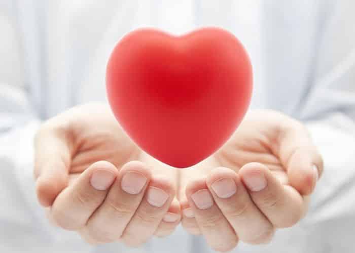 Cây hoa hòe duy trì hoạt động của hệ tim mạch luôn ở trạng thái ổn định