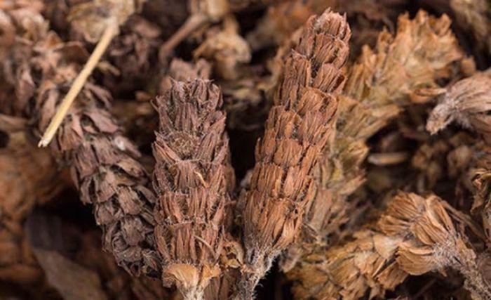 Hạ khô thảo có tác dụng ổn định huyết áp hiệu quả