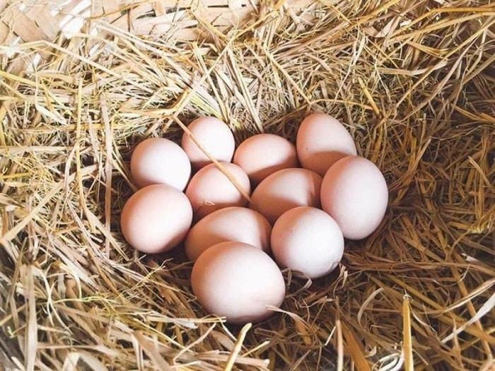 Trứng gà nên chọn loại chất lượng