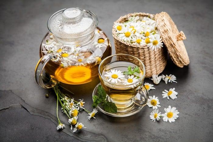 Bạch cúc là thảo dược vàng cho người bệnh tiểu đường