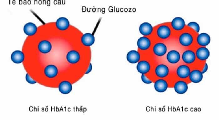 Chỉ số này giúp xác định lượng Glucose bám trên hồng cầu