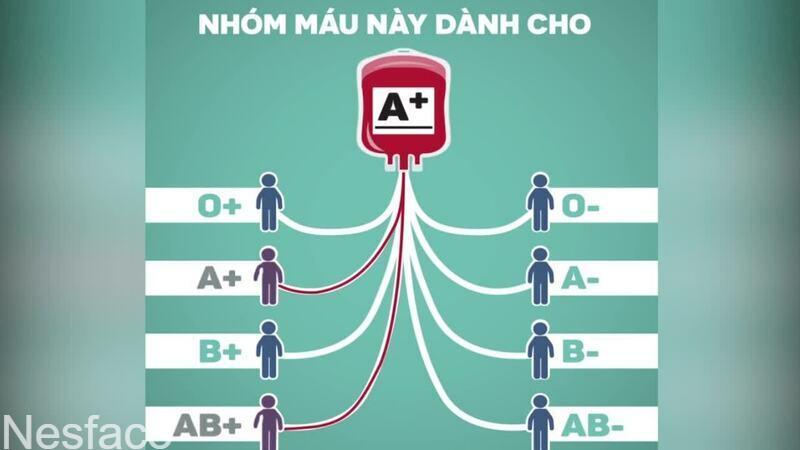 Nhóm máu của bạn là gì có ý nghĩa rất lớn trong truyền máu