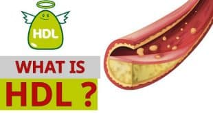 Chỉ số HDL Cholesterol trong máu