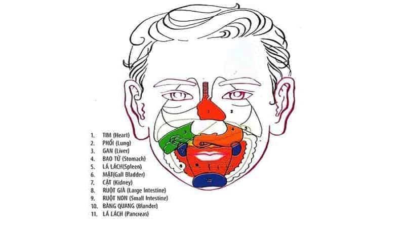 Mỗi điểm trên mặt là đại diện cho một bộ phận trong cơ thể