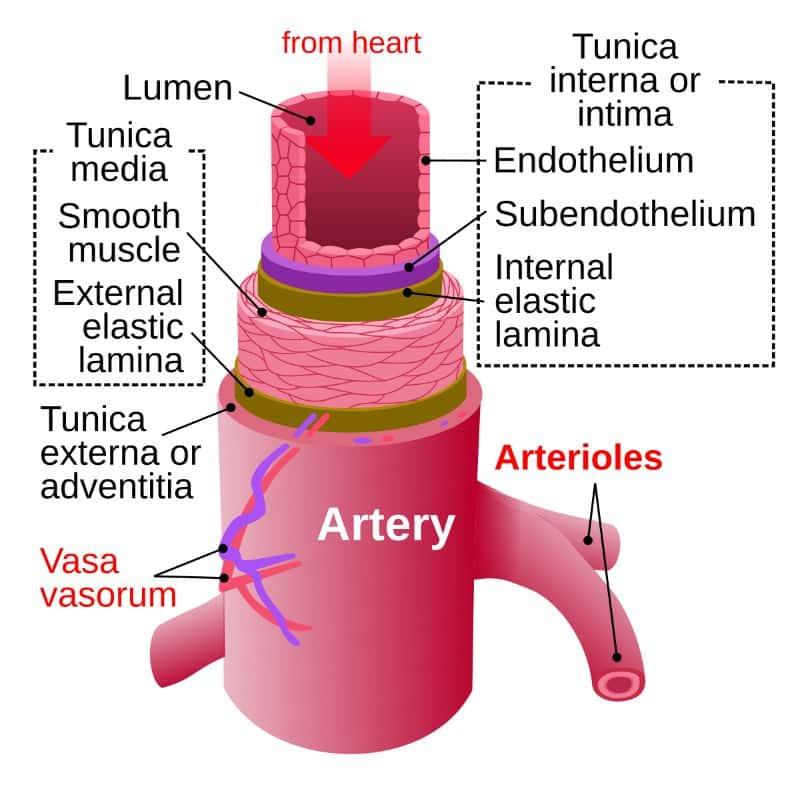 Hình ảnh động mạch
