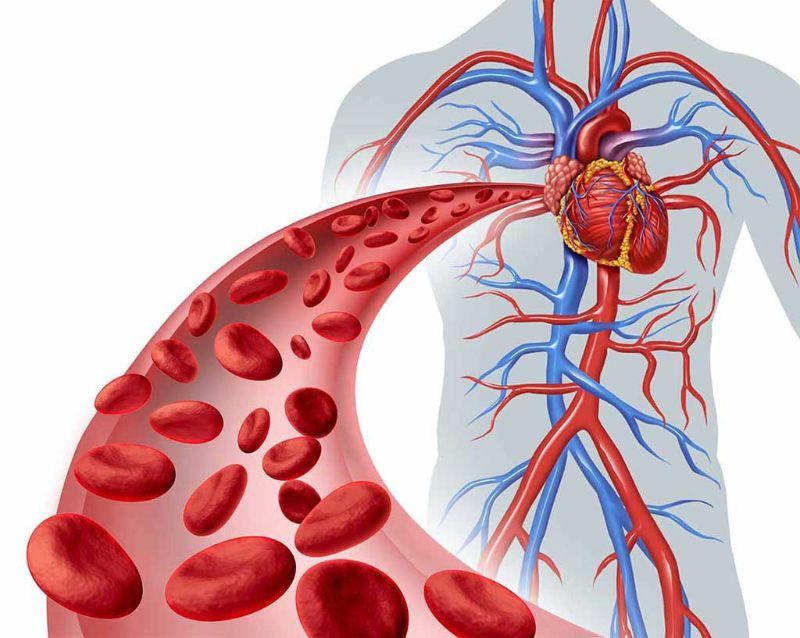 Phác đồ điều trị rối loạn lipid máu