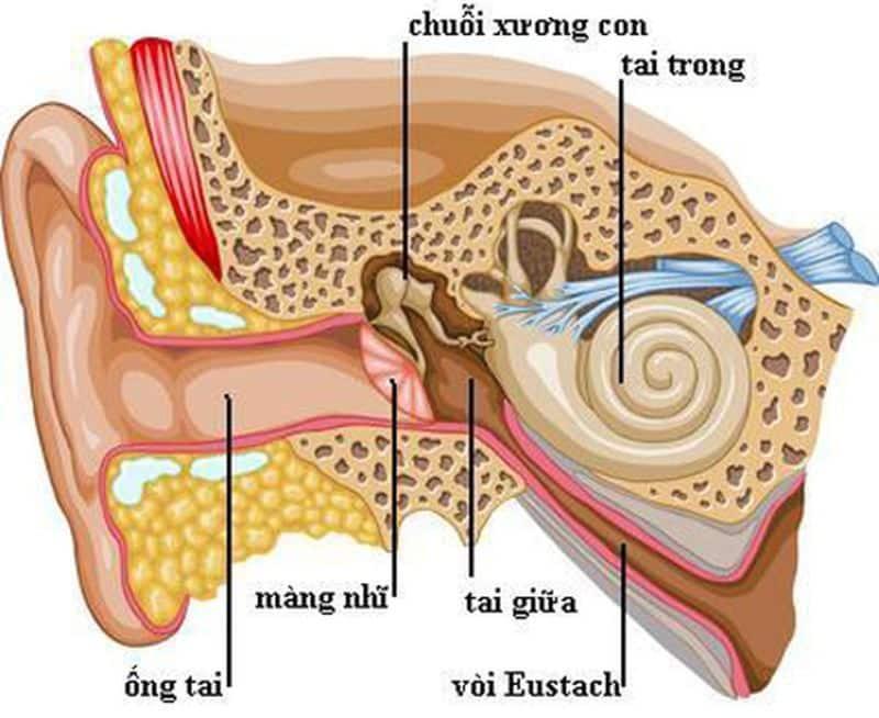 Rối loạn tuần hoàn tai trong là bệnh vô cùng nguy hiểm