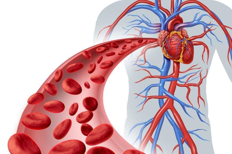 cách làm sạch mạch máu