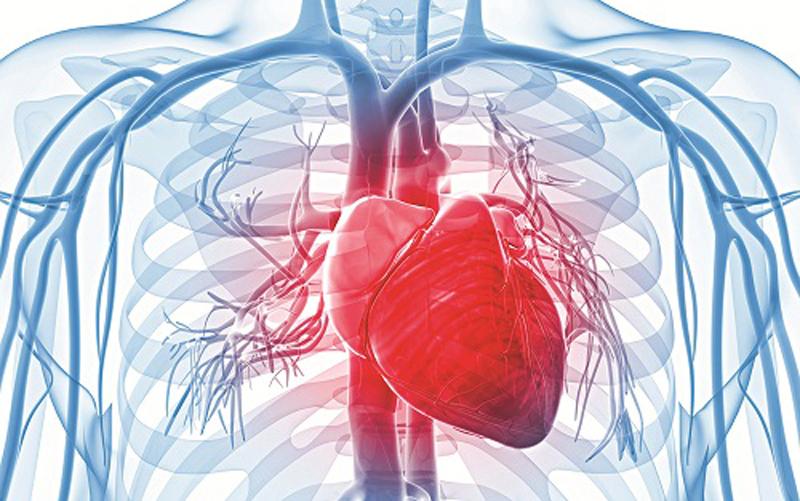 Mạch máu dẫn đến tim là mạch gì